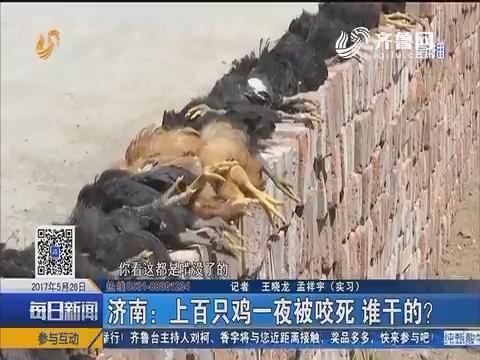 济南:上百只鸡一夜被咬死 谁干的?