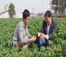 20170528《齐鲁先锋》:身边党员·共筑中国梦 党员争先锋 我的爸爸陈明利(上)—— 一生爱种菜