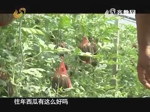 20170529《品牌农资龙虎榜》:泰安张岭的西瓜经