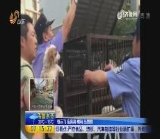 济南:文明养犬 一家两只要查处