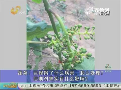 20170601《农科直播间》:葡萄中后期管理