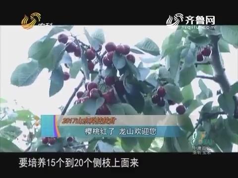 20170603《农科直播间》:2017山东科技扶贫——樱桃红了 龙山欢迎您