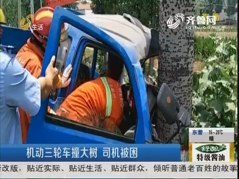 滕州:机动三轮车撞大树 司机被困
