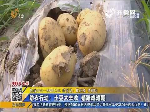 【泗水】助农行动:土豆大丰收 销路成难题