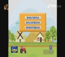 山东:精细改造 打造精致农业先行区