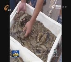 青岛近海增殖放流150多万单位优质苗种