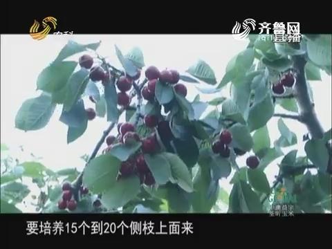 20170605《农科直播间》:2017山东科技扶贫 樱桃红了 龙山欢迎您