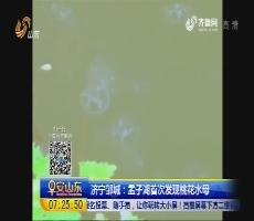 济宁邹城:孟子湖首次发现桃花水母