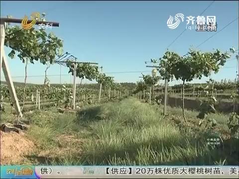 20170608《农科直播间》:水肥一体看山东 探究大户庄园