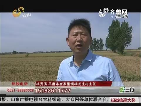 号外!平度杨龙庄五千亩地流转招商