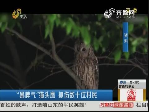 """淄博:""""暴脾气""""猫头鹰 抓伤数十位村民"""