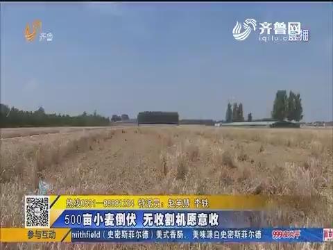 【急事急办】济南:500亩小麦倒伏 无收割机愿意收