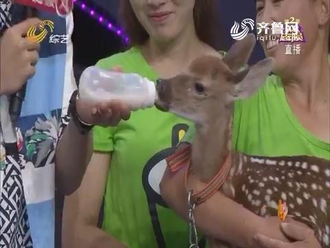 全家总动员:爱鹿家庭带小鹿宝宝上台萌翻全场
