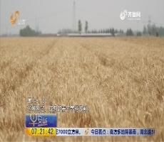 新三夏故事:一粒麦子的旅程