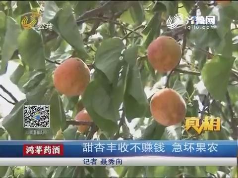 【真相】济南:甜杏丰收不赚钱 急坏果农