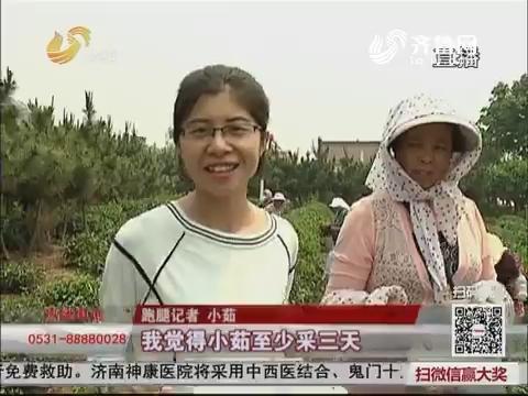 【群众新闻】日照:自然农法 种出好茶