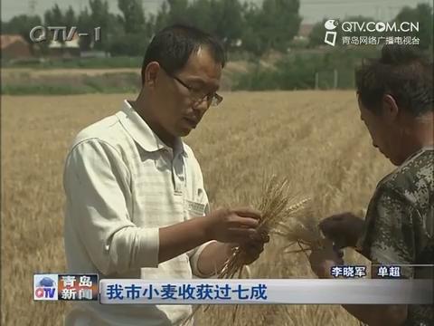 青岛市小麦收获过七成