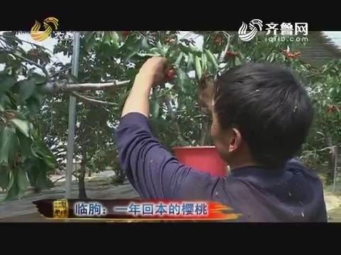 20170612《品牌农资龙虎榜》:临朐 一年回本的樱桃