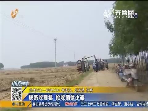 【急事急办】肥城:联系收割机 抢收倒伏小麦