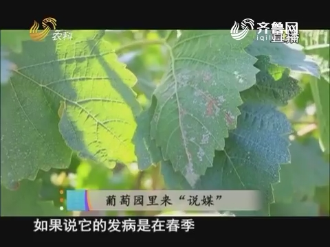 """20170613《当前农事》:葡萄园里来""""说媒"""""""