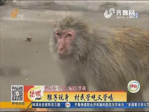 淄博:稀客进村 一住半年不愿走