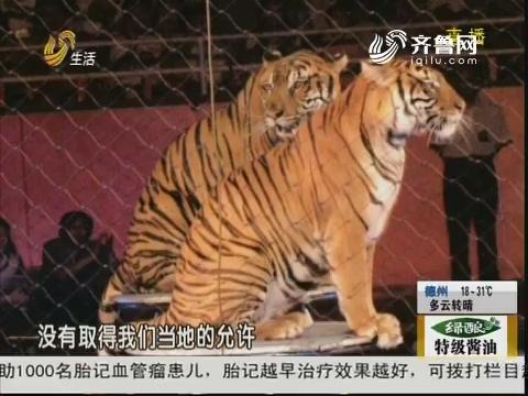 烟台:拉着老虎上路 路人报警