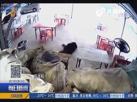 青岛:大阵势 数十民警严阵以待打藏獒