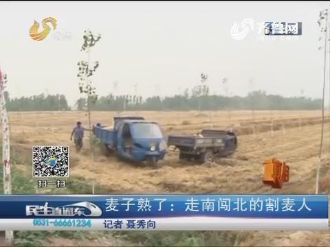 【真相】聊城:麦子熟了 走南闯北的割麦人