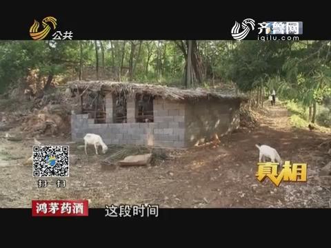 【真相】临沂:智擒山村偷羊贼