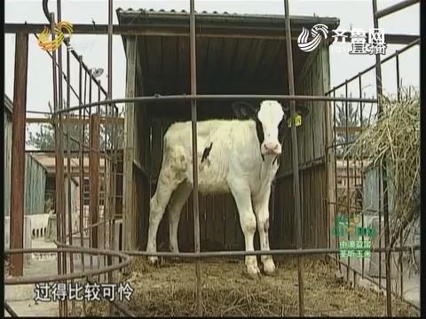 20170616《农科直播间》:山东省牛产业创新团队 奶牛高效健康养殖高峰论坛
