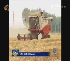 """山东麦收首次推出""""收割机指数"""" 信息化助力丰产丰收"""