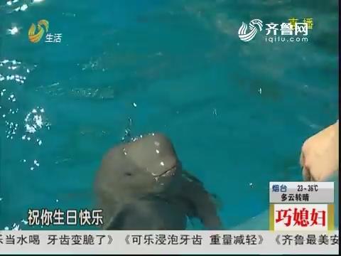 济南:人工繁殖海水江豚一岁了!