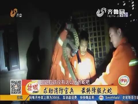 济南:晚上散步 一条大蛇趴门口