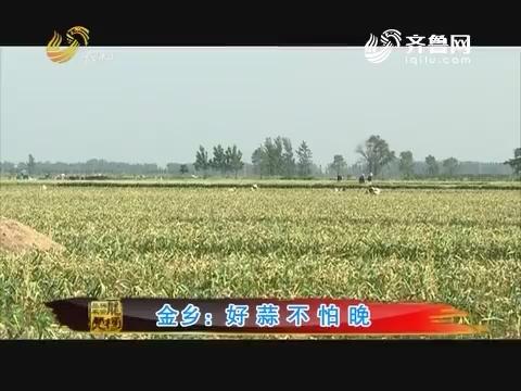 20170619《品牌农资龙虎榜》:金乡 好蒜不怕晚