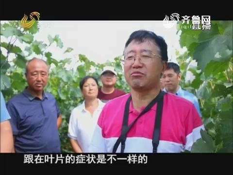 """20170619《当前农事》:葡萄园里来""""说媒"""""""