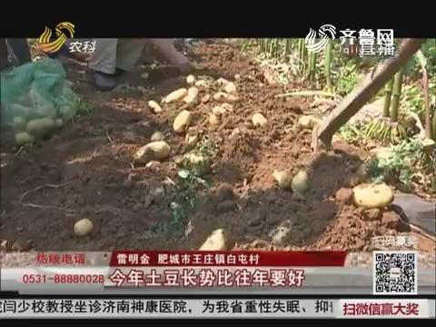 肥城:种植服务到地头 农民增产又增收