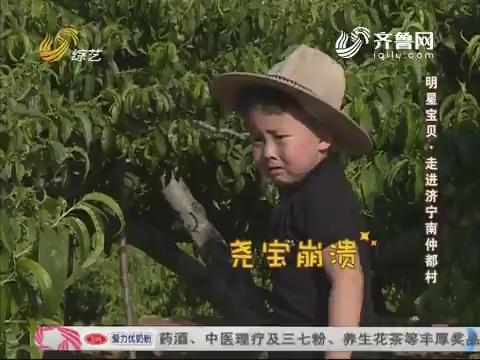 明星宝贝:尧宝VS昊哥 油桃之争谁是赢家