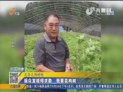 青岛:观众发视频求助 我要卖构树!