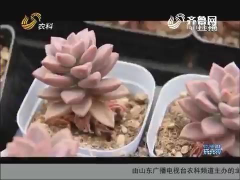 """刘志和他的""""小鲜肉"""""""