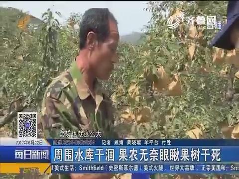"""牟平:村支书自费打井抗旱保住村民""""生财树"""""""
