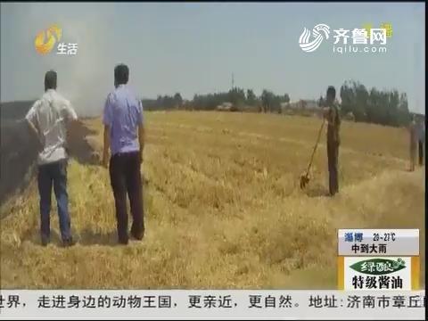 潍坊:火借风势!烧光麦茬