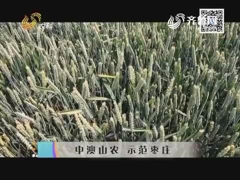 中澳山农 示范枣庄