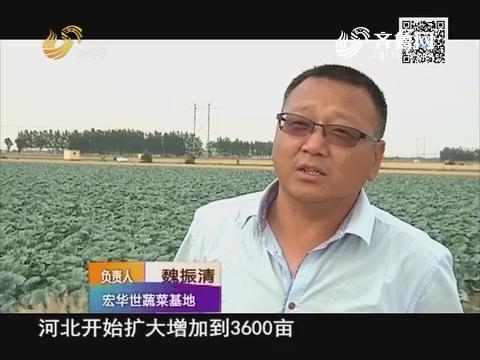 """""""三农富康""""大户俱乐部——新手菜农魏振清"""