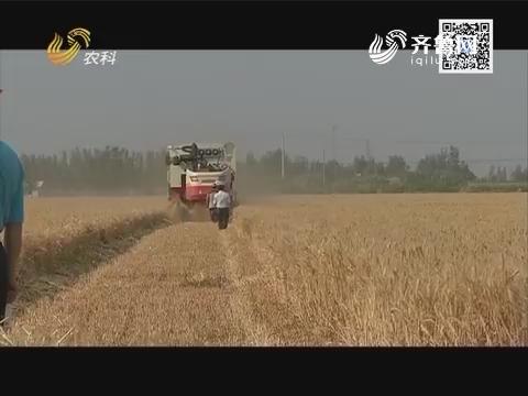 小螺号农技服务直通车——小麦施肥 一劳永逸
