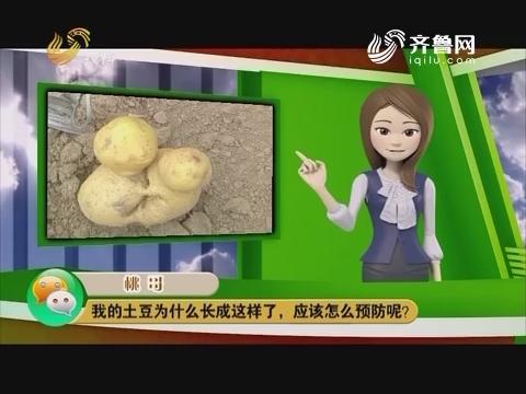庄稼医院远程会诊:我的土豆为什么长成这样了,应该怎么预防呢?