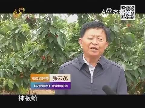 天下五谷果蔬保姆在行动——控制虫害 减少流胶
