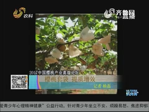 2017中国樱桃产业高端论坛 樱桃套袋 提质增效