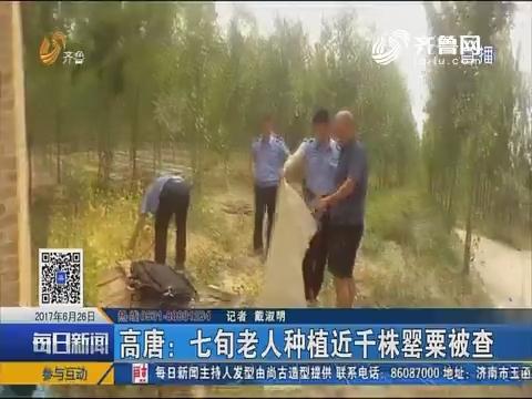 高唐:七旬老人种植近千株罂粟被查