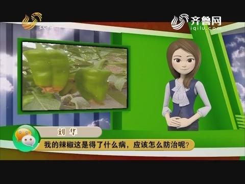 庄稼医院远程会诊:我的辣椒这是得了什么病,应该怎么防治呢?