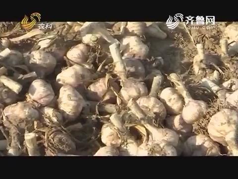 20170627《品牌农资龙虎榜》:金乡 好蒜不怕晚